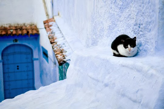 Cat of Chefchaouen