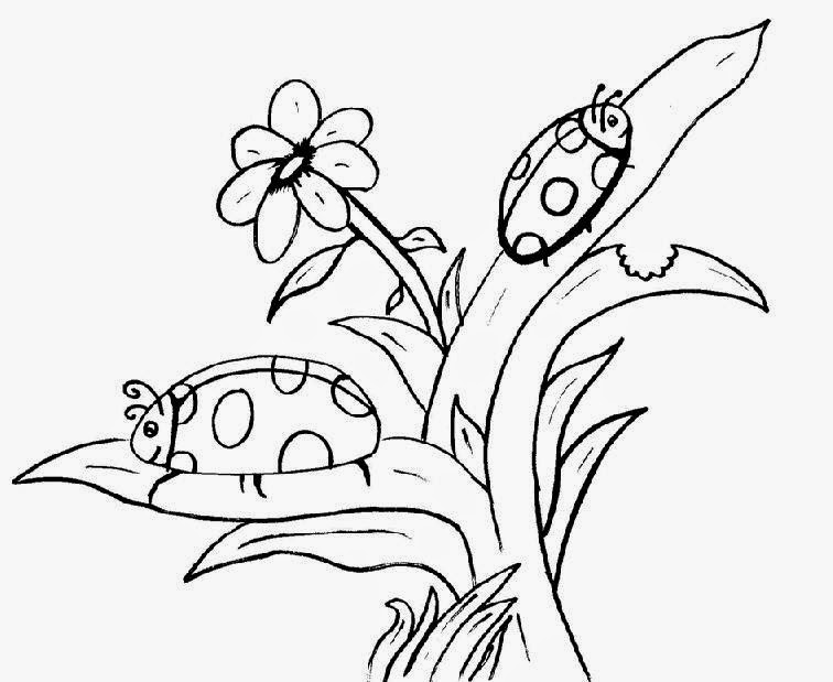Ladybug Coloring Pages Color