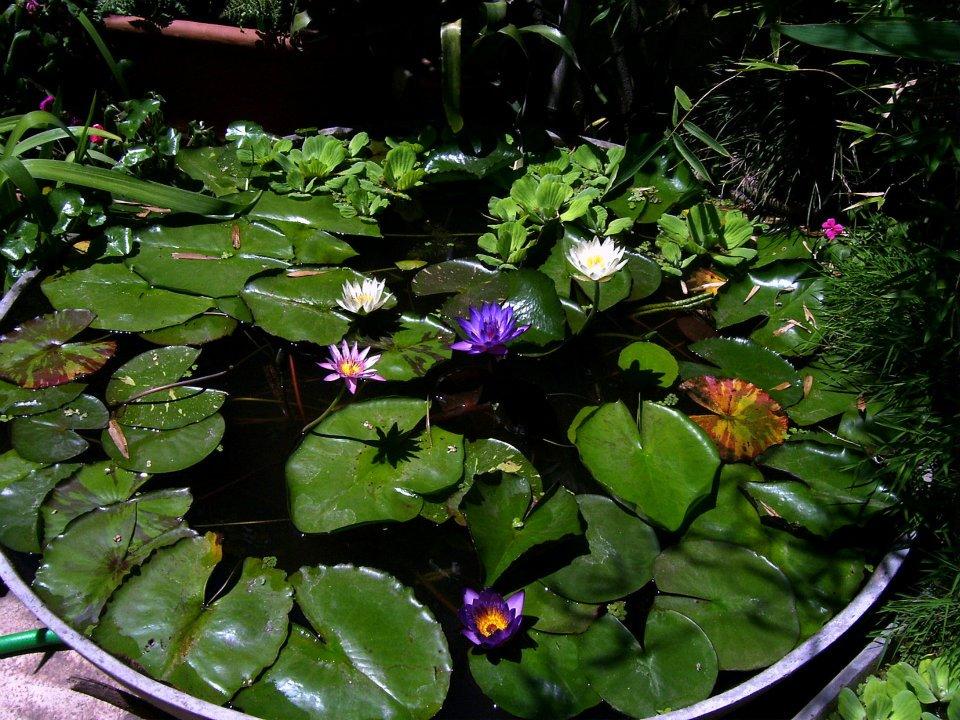 Todas somos reinas proyecto mini mini estanque for Precio estanque