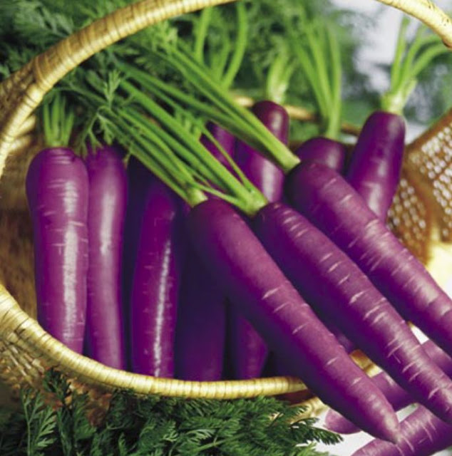 Colors of Carrots Purple Carrots