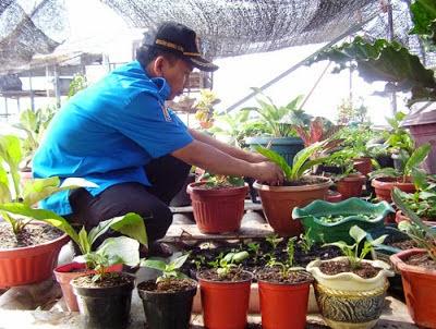 peluang usaha ruamahan tanaman hias