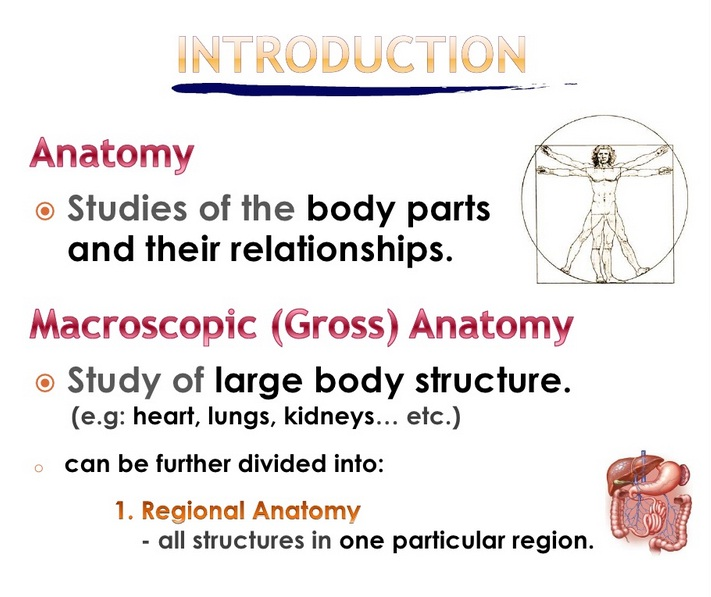 General Introduction To Anatomy Physiology Powerpoint File Free
