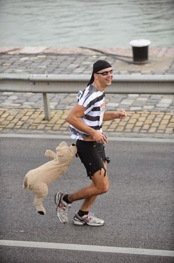 Echipament de alergare, in pas cu moda. Caine
