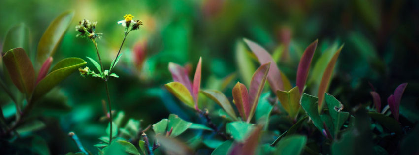 Green life facebook cover
