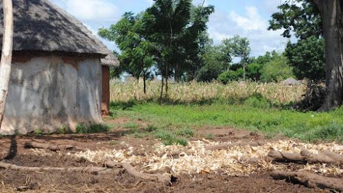 A maximização da produção de grãos não vai atender às necessidades africanas futuras