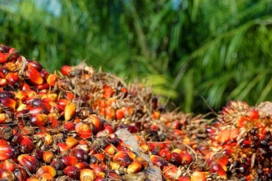 5 Komoditas Pertanian Dan Perkebunan Indonesia Yang Mendunia