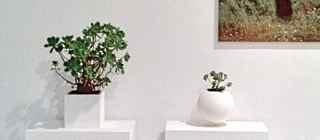 Exhibition / Exposiciones