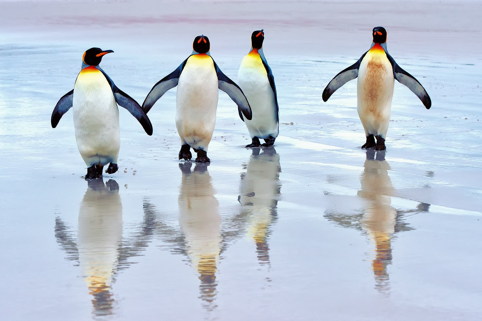 Penguin desktop wallpaper hd - photo#13