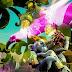 Plants vs. Zombies : Garden Warfare 2 - La bêta multijoueur débarque en janvier