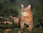 Коты-Males