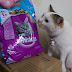 Miu Miu loves Whiskas Mix Feeding!