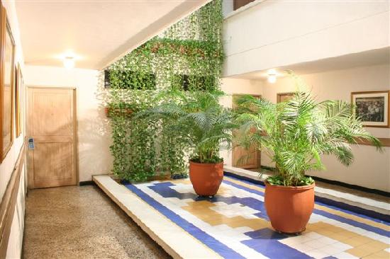 Jard n interior guia de jardin for Plantas de jardin interior