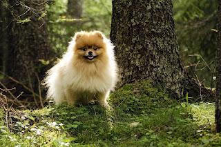 Cute pets pictures for desktop PC