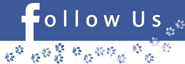 follow fanpage; mencari follower; jangkauan fanpage;
