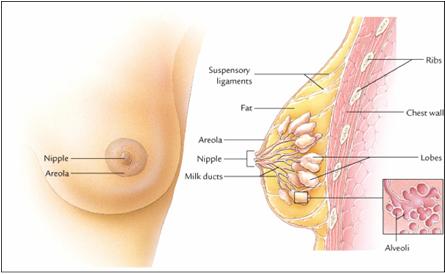 Image Cara Ampuh Menyembuhkan Kanker Payudara