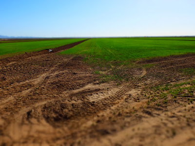 Views of Alfalfa Fields in the Imperial Valley