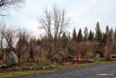 trädgård, månadsbild