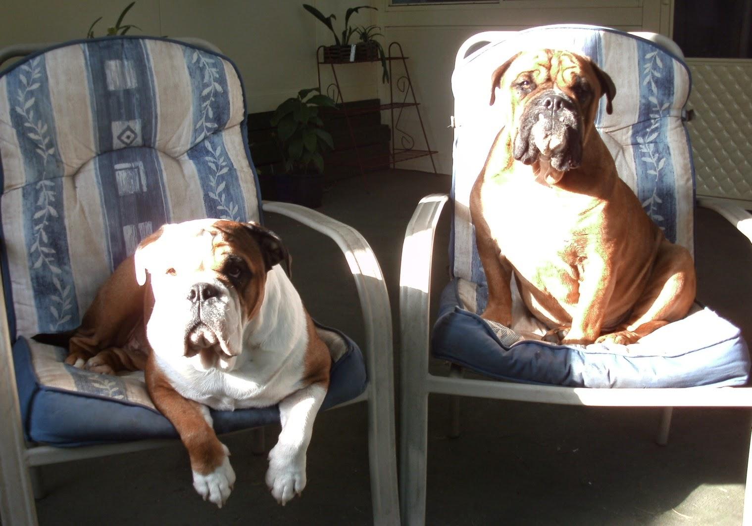 My helpers