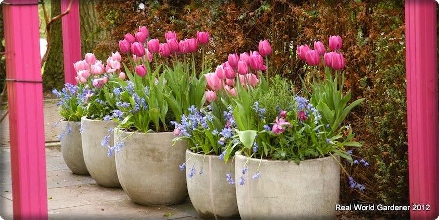 Sadnja lukovica proljetnog cvijeća lazanja metodom - Moj Vrt Cvijeća