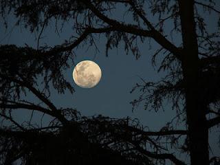 Poemas en Luna Llena - Página 5 Luna