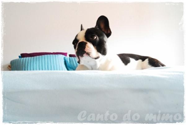 ♥                                                                 Canto do             Mimo