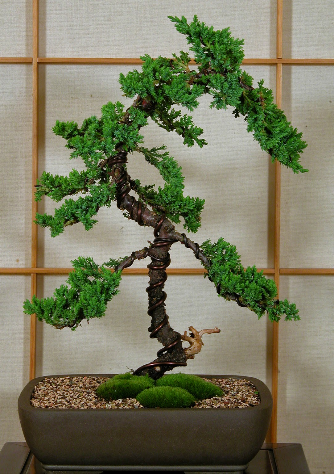 Bonsai Tree Bonsai Tree Step Six Aftercare