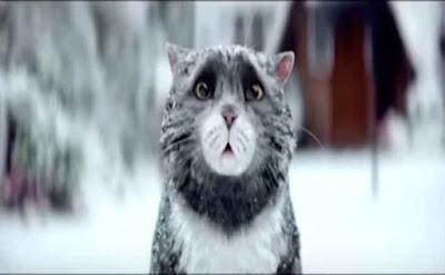 Significado de la Navidad, gato, travieso,
