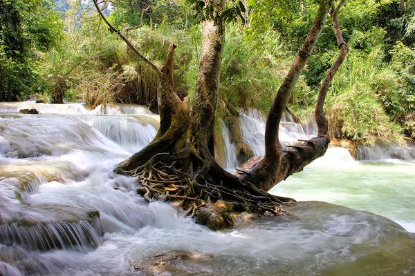 Cachoeiras de Kuang Si - Luang Prabang