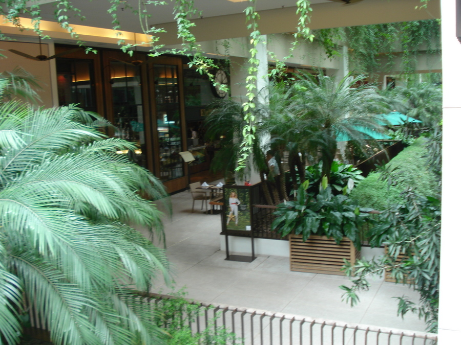 Plantas que se dão bem na sombra, como a licuala, os líriosdapas