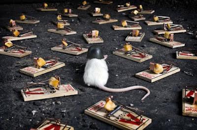 Cara Mengusir Tikus Curut Di Plafon Atap Dan Got Rumah