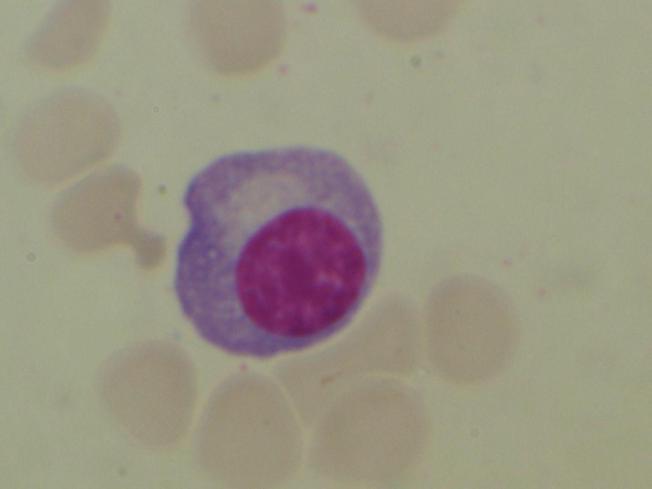 Salisbury's Graduate Histology