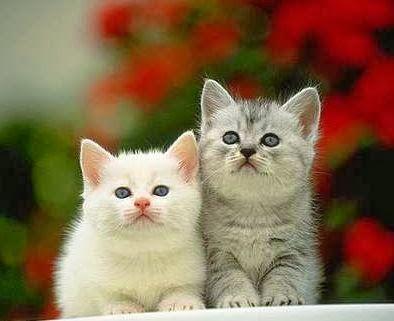 ... kualitas seekor kucing angora maka akan semakin tinggi pula harganya