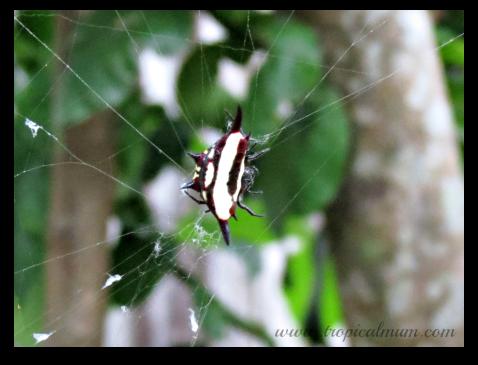 Weird Spider