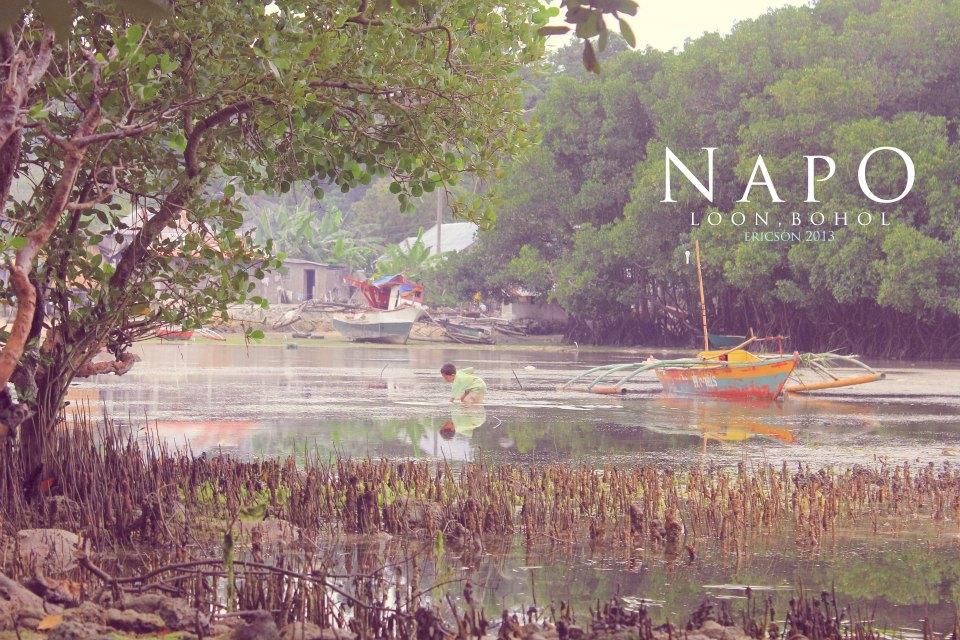 napo, loon, bohol, napo beach, mangroves, mangrove, tulay