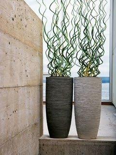 Mirian decor 01 04 11 01 05 11 - Zimmerpflanzen groay ...