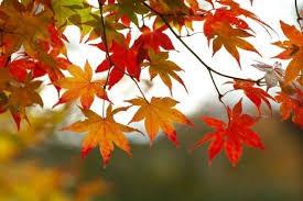 Season of Autumn