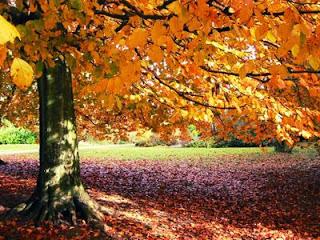 geld besparen in herfst en winter