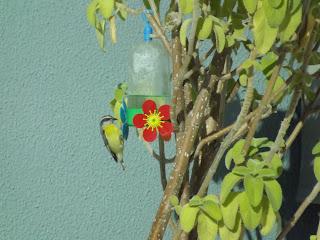 www.maristelagsalgado.blogspot.com.br
