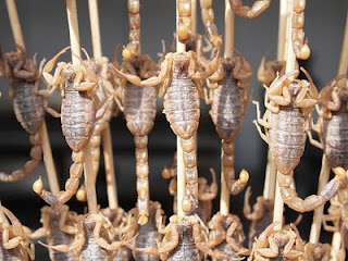 Scorpion on a stick - Snack Steet, Wangfujing