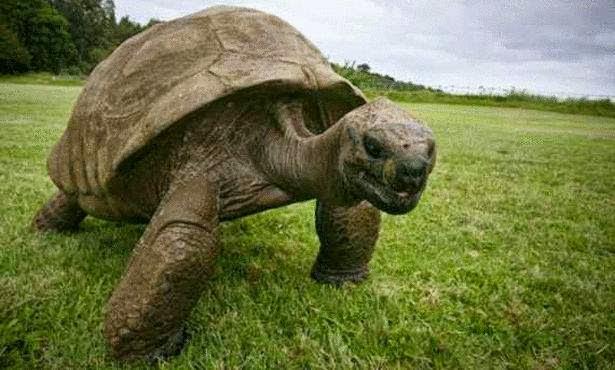 أقدم كائن حي على سطح الأرض | أطول الكائنات الحية عمرا على الأرض حتى الآن Tortoise Jonathan oldest living animal in the world