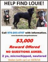 Reward: Missing Dog