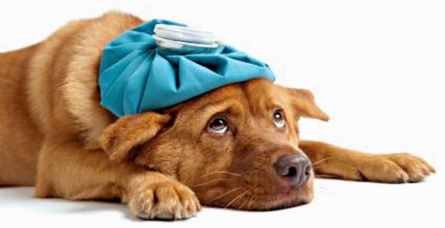 http://bothellveterinarian.wordpress.com/2013/05/01/seeking-veterinary-attention-for-a-vomiting-dog-or-cat/