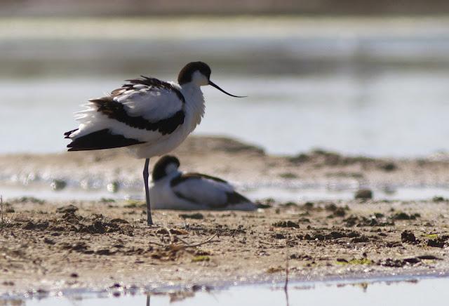 Birds, Birding, Conservation