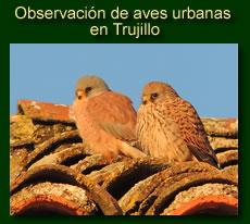 http://iberian-nature.blogspot.com.es/p/ruta-tematica-observacion-de-aves.html