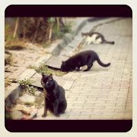 Three Stray Cats Turkish Street