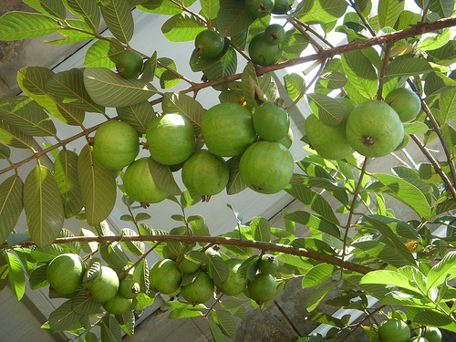 Fruit For The Office Top 10 Tastiest National Fruits