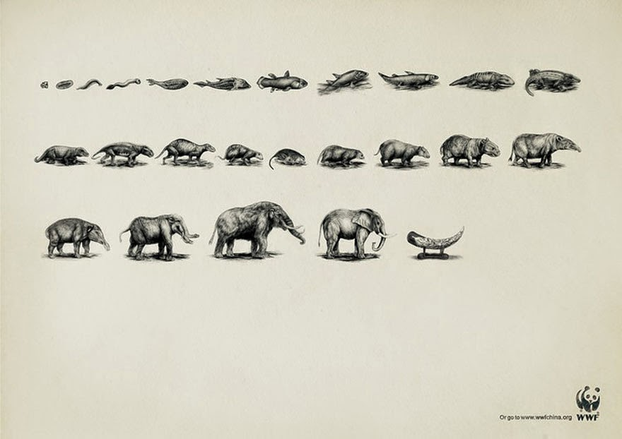 WWF: Evolution - 33 Powerful Animal Ad Campaigns That Tell The Uncomfortable Truth