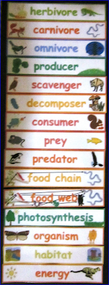 science-Food-Chain-and-Food-Web-word-wall