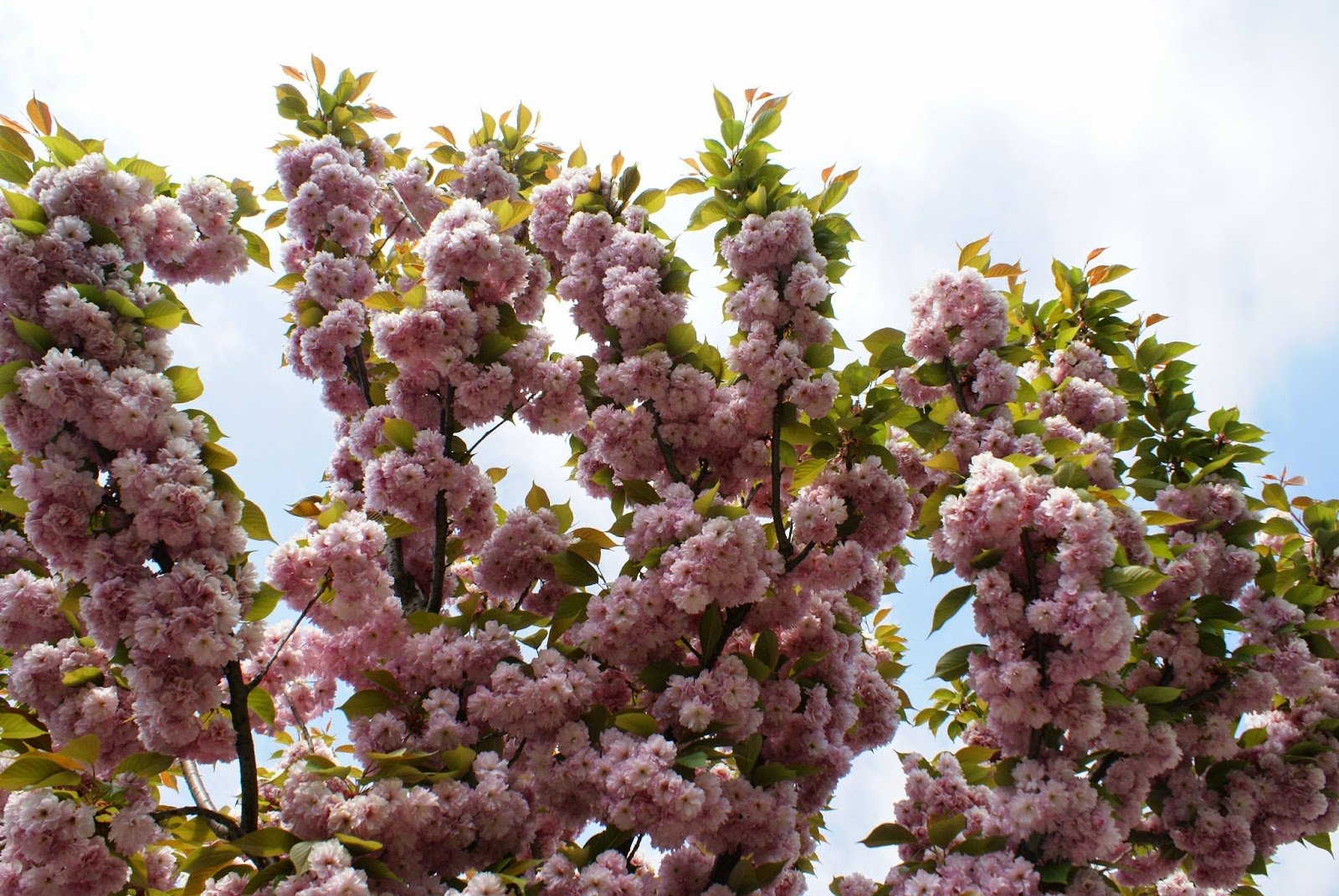Parcul Rozelor din Timisoara - 24 aprilie 2015 (1)