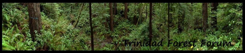 Trinidad Forest Forum